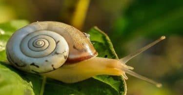 صورة تفسير الاحلام حلزون , تفسير الحلزون فى المنام