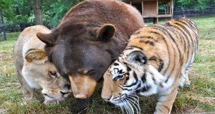 رؤية حيوانات غريبة في المنام , رؤية حيوان غريب له تفسير اغرب
