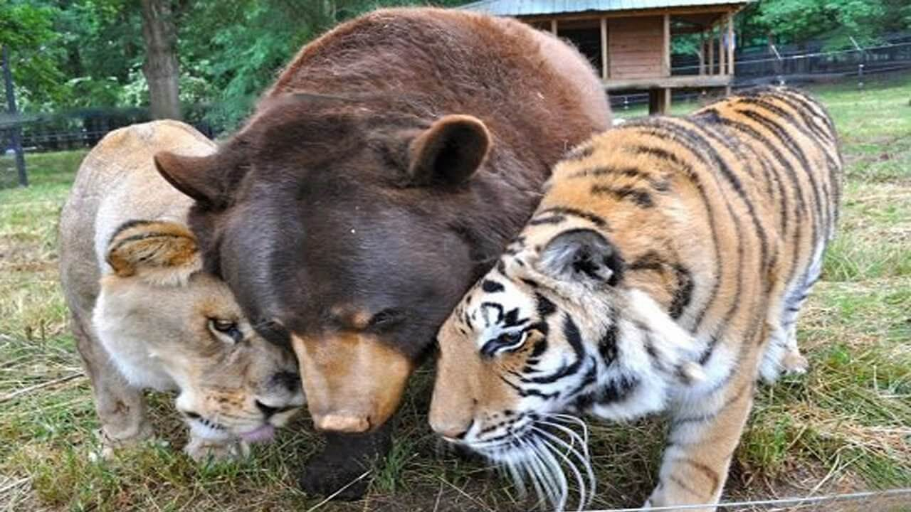 صور رؤية حيوانات غريبة في المنام , رؤية حيوان غريب له تفسير اغرب
