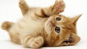تفسير الاحلام عن القطط , معني رؤية القطط في المنام