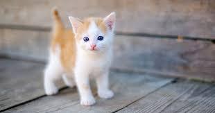 صورة تفسير الاحلام عن القطط , معني رؤية القطط في المنام