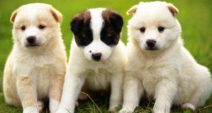 الكلاب في المنام , معني الكلاب في الحلم