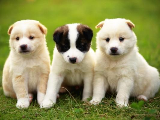 صورة الكلاب في المنام , معني الكلاب في الحلم
