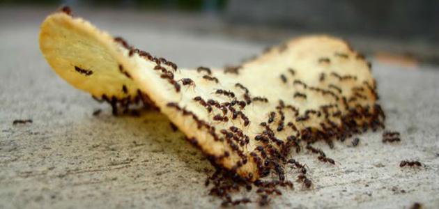 بالصور تفسير وجود النمل في البيت , اسباب ظهور النمل في البيت 1026 1