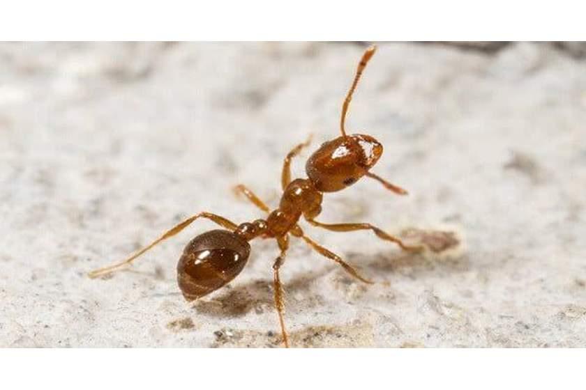 بالصور تفسير وجود النمل في البيت , اسباب ظهور النمل في البيت 1026 2