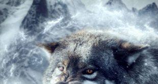صور الذئب في المنام , تفسير رؤية الذئب في الحلم