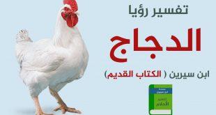تفسير الاحلام دجاج , تفسير رؤية الدجاج في المنام