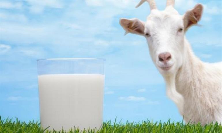 صورة حليب الماعز في المنام , تفسير رؤية حليب الماعز للمراة 3585