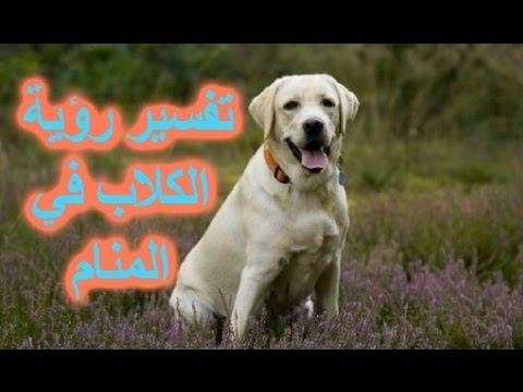 بالصور الكلب فى الحلم , معني رؤية الحيوانات في المنام 4095