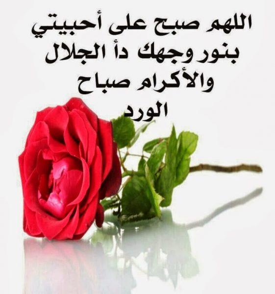 صورة صور ورود مكتوب عليه , بطاقات زهور عليها كلمات جميلة
