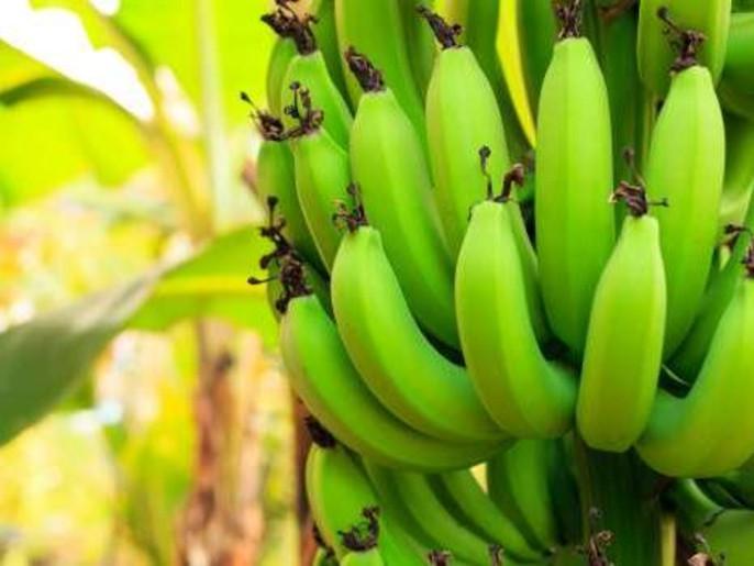 صورة فوائد الموز الاخضر , تعرفي علي اهم فاكهة لانقاص الوزن
