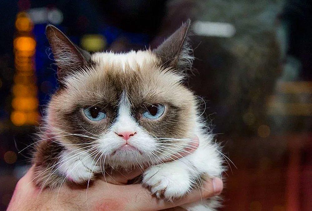 بالصور اغلى قطة في العالم , من الحيوانات الاليفة التى يحبها الاطفال فى المنزل 5836 11
