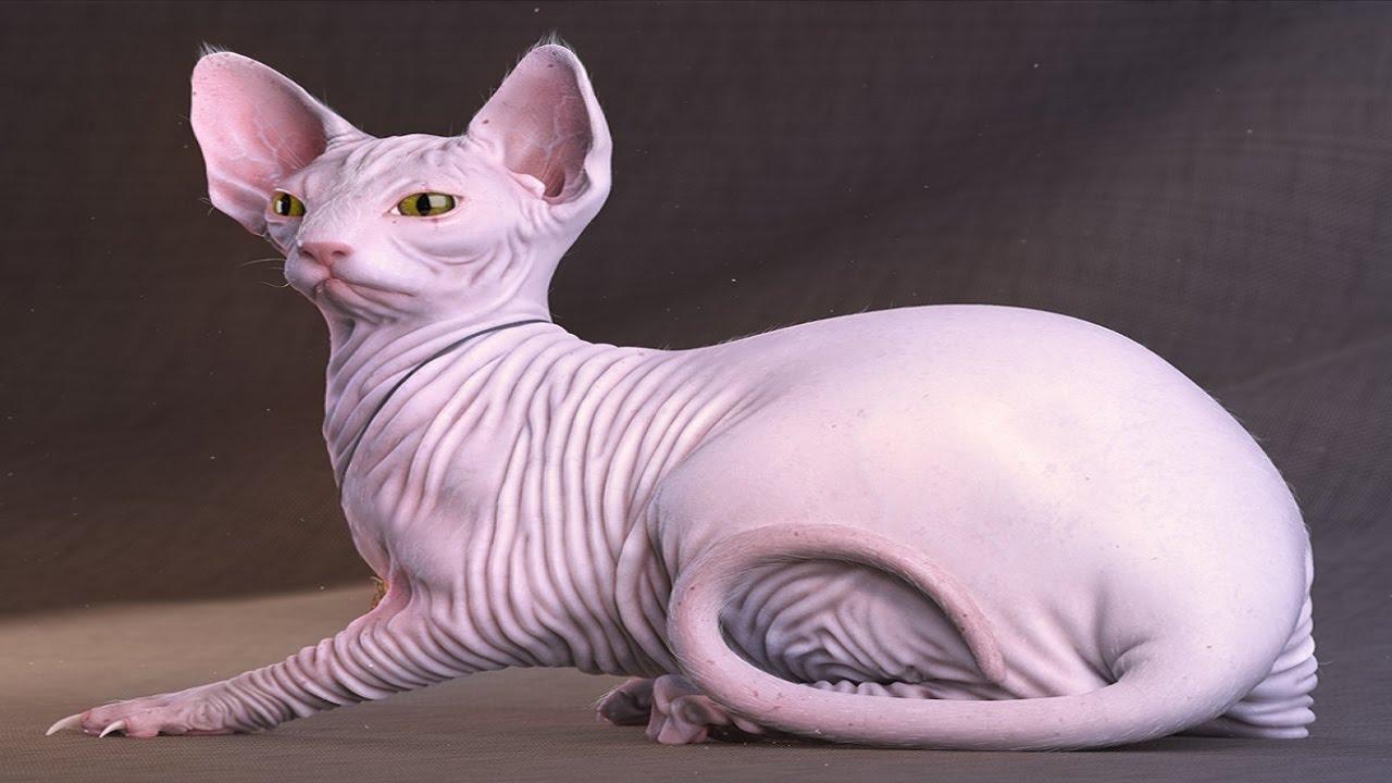 بالصور اغلى قطة في العالم , من الحيوانات الاليفة التى يحبها الاطفال فى المنزل 5836 2