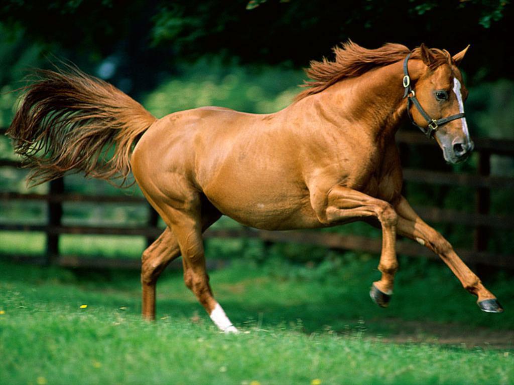 صور اجمل صور خيول , اصل الفروسية هى الخيول