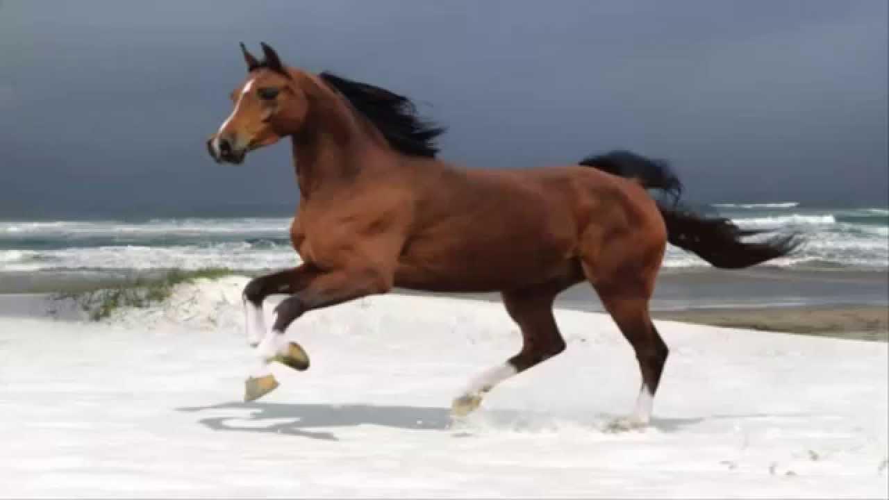 بالصور تفسير الاحلام الحصان البني , الحصان رمز للقوة و الثروة 5894 1