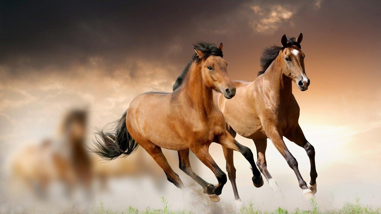 بالصور تفسير الاحلام الحصان البني , الحصان رمز للقوة و الثروة 5894