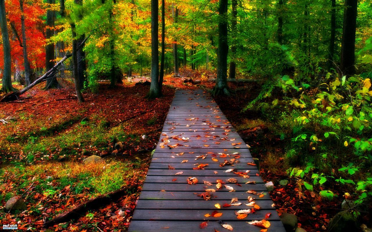 بالصور افضل صور الطبيعة , لوحات من صنع الله 5895 2