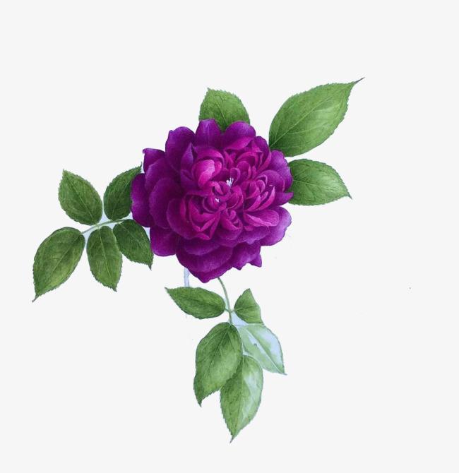 بالصور خلفيات ورد بنفسجي , اجمل صور لزهور بنفسجية 612 4