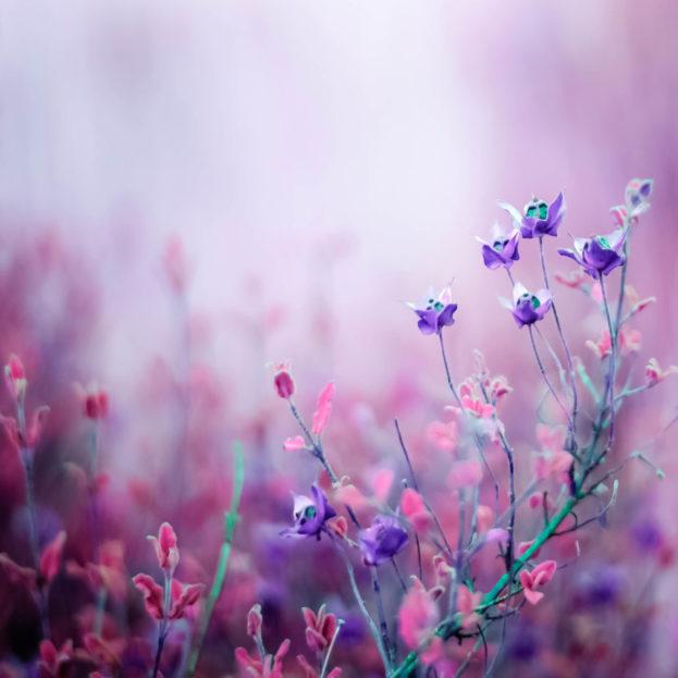 بالصور خلفيات ورد بنفسجي , اجمل صور لزهور بنفسجية 612 5