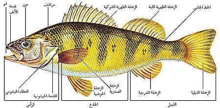 صور معلومات عن الاسماك للاطفال , معلومات مناسبة للاطفال عن الاسماك