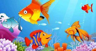 بالصور معلومات عن الاسماك للاطفال , معلومات مناسبة للاطفال عن الاسماك 1158 11 310x165