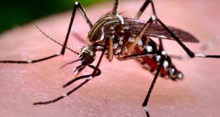 بالصور اخطر انواع البعوض , تعرف علي اكثر الحشرات التي تشكل خطر علي الانسان 1762 3 310x165