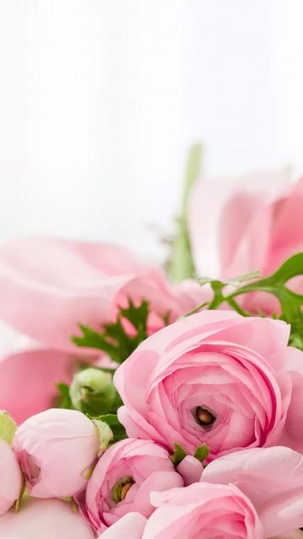 صورة ورود جميلة جدا , تشكيلة من اروع انواع الزهور المختلفة
