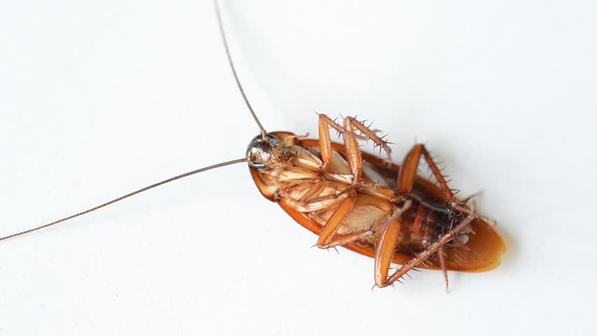 صورة قتلت صراصير في المنام , تفسير قتل الصراصير في الحلم