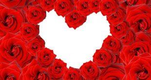 صور خلفيات قلوب وورود , الورد افضل رسول بين الناس