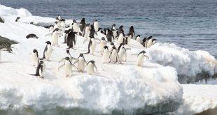 بالصور برجراف عن انتاركتيكا , انتاركتيكا هى القارة الاكثر برودة بين القارات 5799 13 310x165