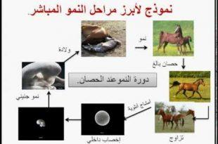 صور التوالد عند الحيوانات , التكاثر في الحيوانات