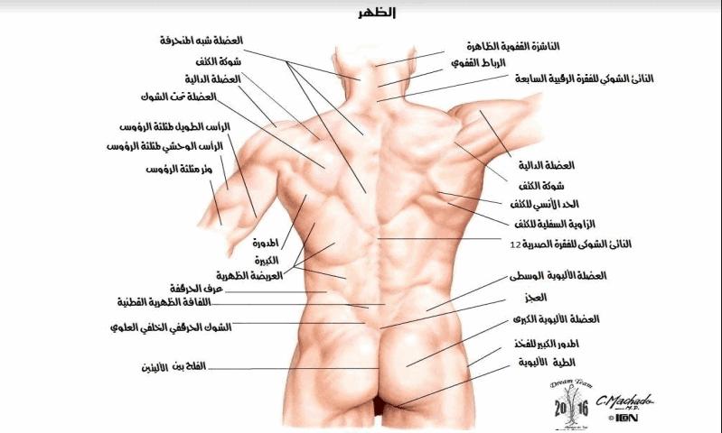 صور صور جسم الانسان , صور حتى تتعرف على جسم لانسان