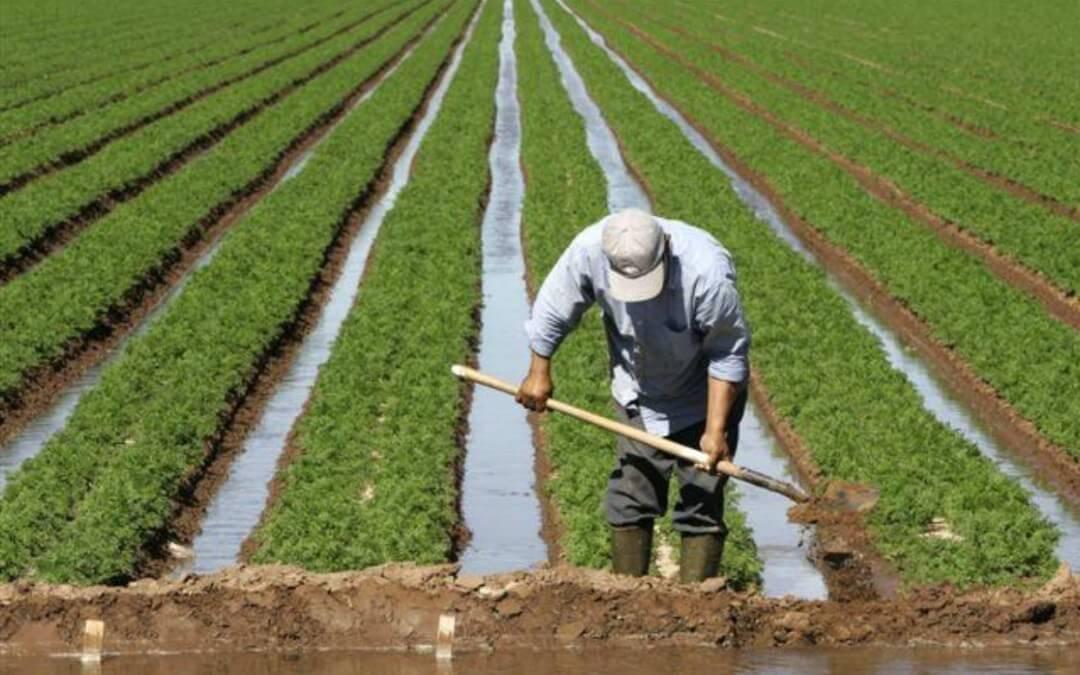 صور تفسير حلم الزراعة , تعرف على رائة حلم الزراعه