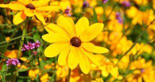 صور تفسير حلم اللون الاصفر , رائت اللوان الاصفر في المنام