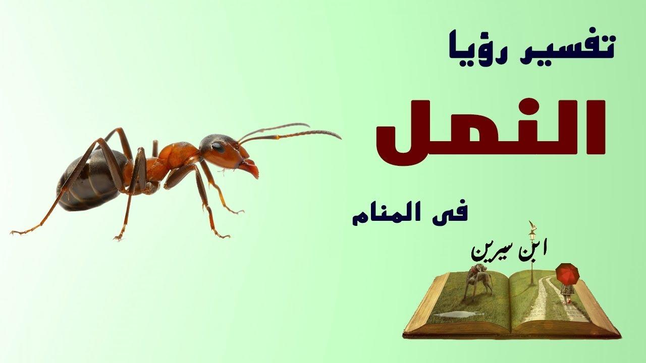 صور النمل في الحلم , تفسير حلم النمل في المنام