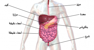 صور تشريح الجهاز الهضمي , تعرف على ما يكون في الجهاز الهضمي