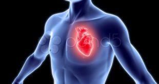 صور قلب الانسان بالصور , اهم جزاء في جسم الانسان