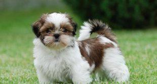 صور انواع الكلاب بالصور والاسم , بالصور والاسماء اعرف انواع الكلاب