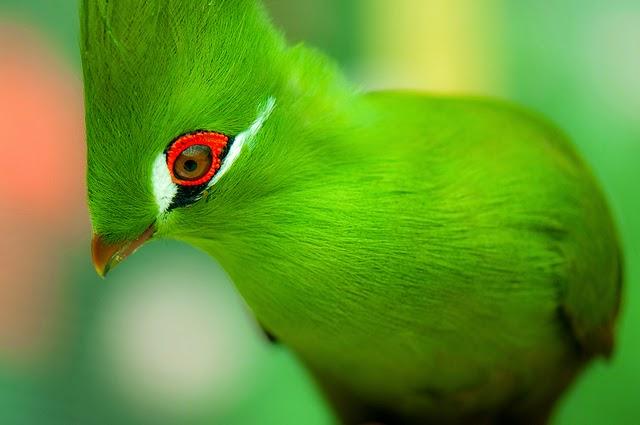 صور اجمل انواع الطيور , اروع صور لاجمل طيور بالعالم