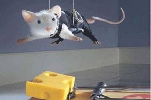 صور افضل طريقة لصيد الفئران , طريقة سريعة لصيد الفئران مرة واحدة