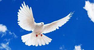صور صور حول السلام , احلى صور عن السلام رائعة