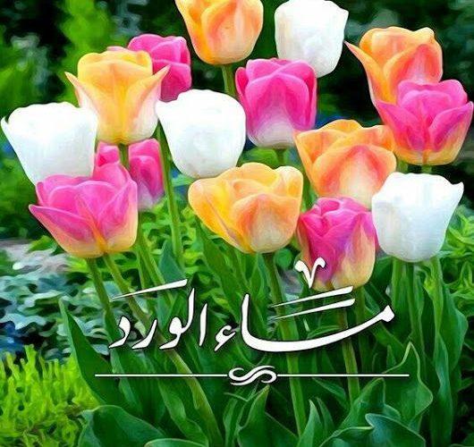 صورة اجمل الصور مساء الخير فيس بوك , تحية المساء الي كل الاصدقاء 4526 9