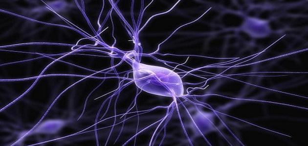 صور مقال علمي عن الجهاز العصبي , معلومات مهمة عن الجهاز العصبي