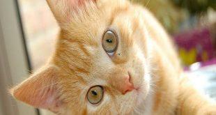 صورة رؤية القطط في المنام للعزباء , انسة ورايت قطة بمنامي فما التفسير