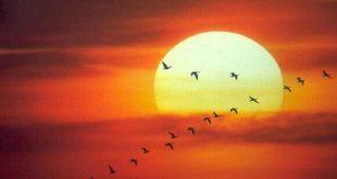 صور عبارات عن الشمس , كلمات عن الشمس