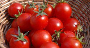صور تفسير حلم الطماطم لابن سيرين , تفسير رؤية الطماطم بالمنام