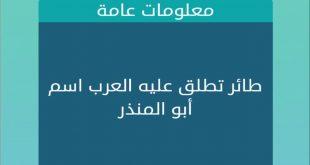 صور طائر تطلق علية العرب اسم ابو المنذر , ما هو اسم طائر مكون من 5 حروف ابو منذر