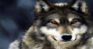 صور تفسير حلم الذئب , اطمن الذئب بالمنام توبة وخير