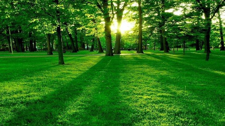 صور تفسير اللون الاخضر في الحلم , تفسير رؤية اللون الاخضر بالمنام