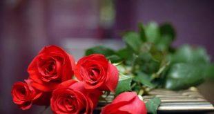 صورة صور زهور طبيعية , اروع باقات زهور طبيعية 3883 12 310x165
